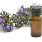 Essential Oils, Glandular Trichomes and the Secondary Metabolism