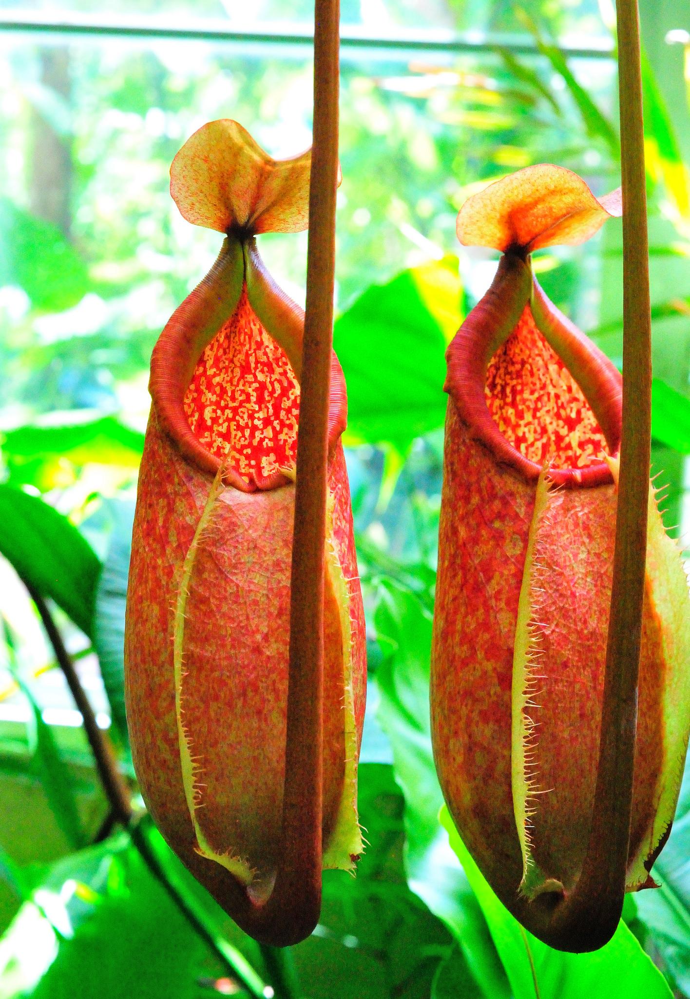 Garden Bush: Predatory Plants