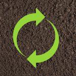 Mycorrhiza: Symbiosis in the Soil