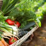 Community Supported Agriculture: Back to Basics