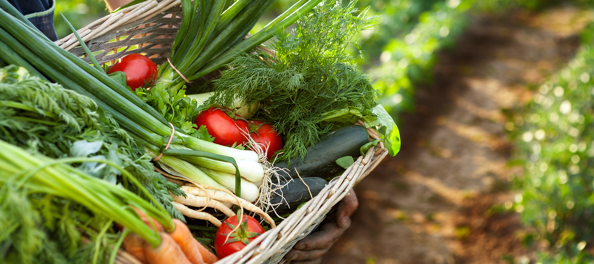 Community Supported Agriculture Back