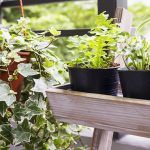 Rehab for House Plans: Techniques to Recover from Overwatering and Over-Fertilizing