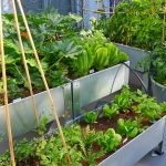 inside of an urban garden with orchard